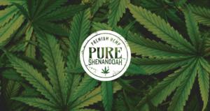 Pure Shenandoah StudioC Creative